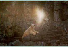 ¿Pueden los animales percibir a los espíritus?